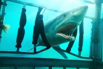 Noc žraloka 3D (2011)