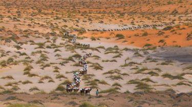 "Home 07 © ""HOME"" – an ELZEVIR FILMS – EUROPACORP coproduction Karavana dromedárů blízko Tichit, Mauritánie (17°29'N - 9°06'W)."