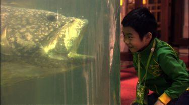 Mizející ryby (2009)