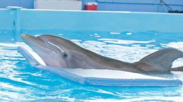 Můj přítel delfín (2011)