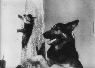 Věrný kamarád (1967)