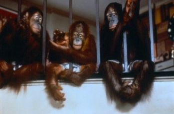 Stát se opicí - Dej opici cukr (1981)