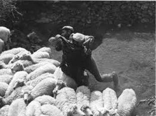 Bandité z Orgosola (1961)