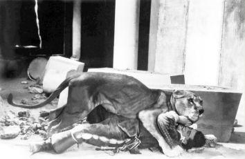 Golem (1936)