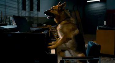 Super pes (2010) [Video]