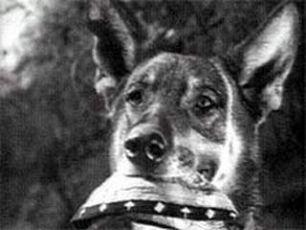 Věrný Džulbars (1935)
