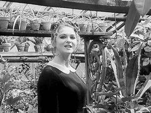 Námluvy komtesy Gladioly aneb Přistání ve skleníku (1970) [TV inscenace]