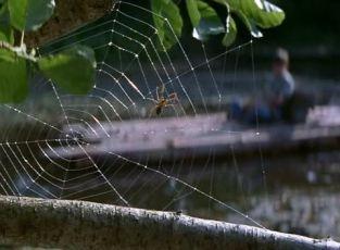 Chraň i malá zvířátka (1998)