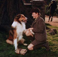 Lassie se vrací (1943)