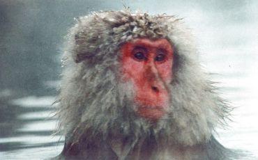 Baraka (1974)