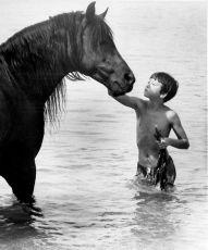 Černý hřebec (1979)