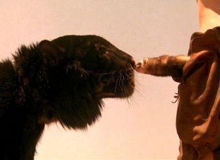 Pán šelem (1982)