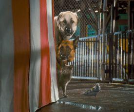 Jako kočky a psi: Pomsta prohnané Kitty (2010)