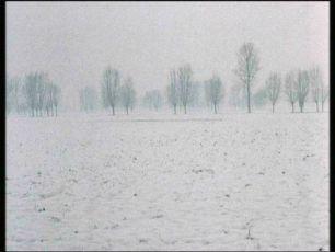 Strom na dřeváky (1978)