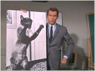 Zatracená kočka (1965)