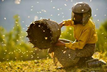 Země medu (2019)
