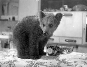 Malí medvědáři (1957)