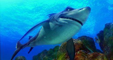 Past na žraloka 2: příliv (2012)