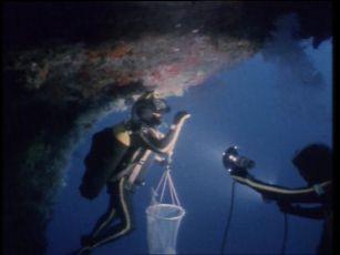 Podmořský svět Jacquese Cousteaua (1966) [TV seriál]