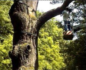 Paměť stromů (2003) [TV seriál]