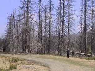 Na samém konci světa u pramene Luzného potoka, pod stromy sežranými kůrovcem rozpráví Luděk Munzar s našim průvodcem.