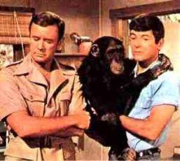 Daktari (1966) [TV seriál]