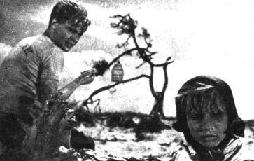 Holubice (1960)