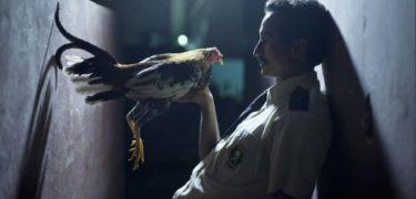 Vše o peří (2013) [2k digital]