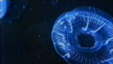 Anima Mundi (1991) [Video]