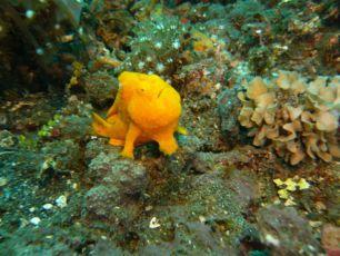 Podmořský svět (2008) [TV seriál]