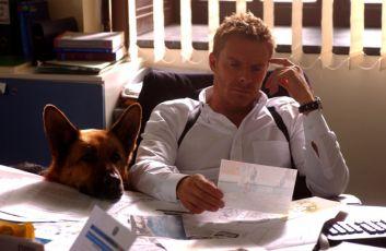 Návrat komisaře Rexe (2008) [TV seriál]