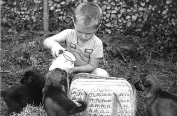 Táto, sežeň štěně! (1964)