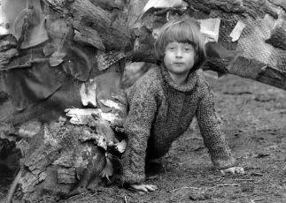 Brontosaurus (1979)