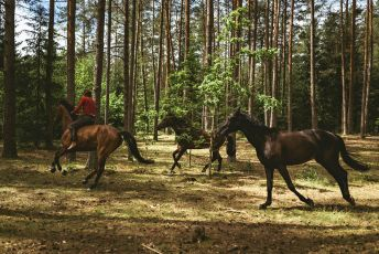 Jít krást koně (2019)