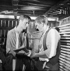 Bratia (1961)