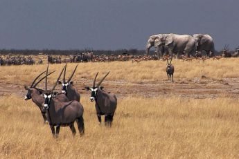 Africká savana (2011) [Video]
