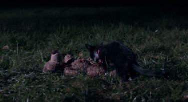 Boloňský medvídek (2015)