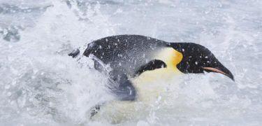 Putování tučňáků: Volání oceánu (2017)