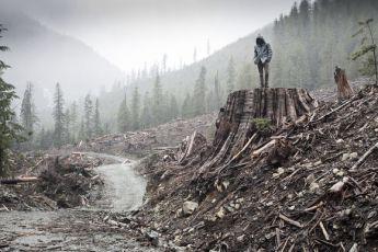 Když se kácí les (2011)