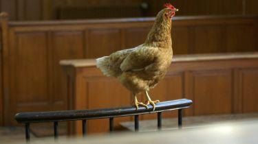 Mají i zvířata svá práva? (2016) [TV film]