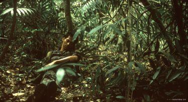 Tropická nemoc (2004)