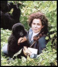 Gorily v mlze (1988)