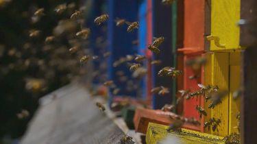 Mistři včelářství (2018) [TV seriál]