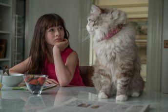 Já, kocour (2016)