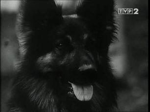 Příhody psa Civila (1970) [TV seriál]
