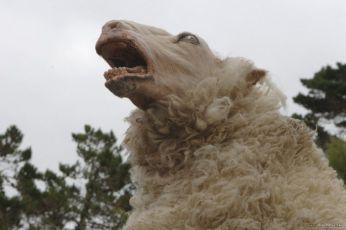 Černé ovce (2006)