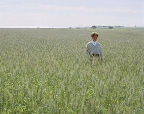 Čtyři odstíny hnědé (2004)