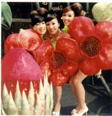 Chuť melounů (2005)