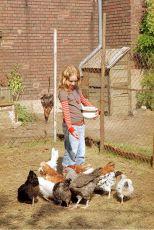 Žáby k zulíbání (2006)