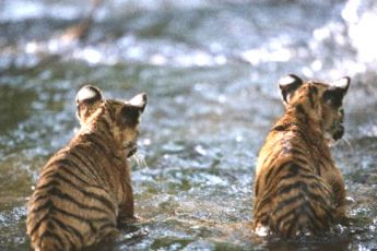 Dva bratři (2004)